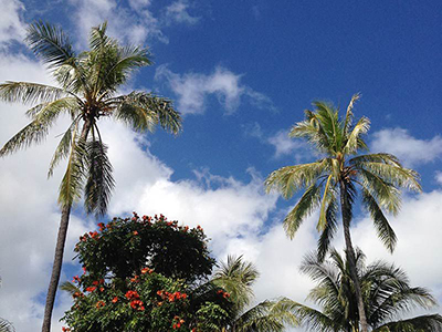 ハワイ ミーティング